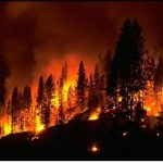 wildfireresized_001